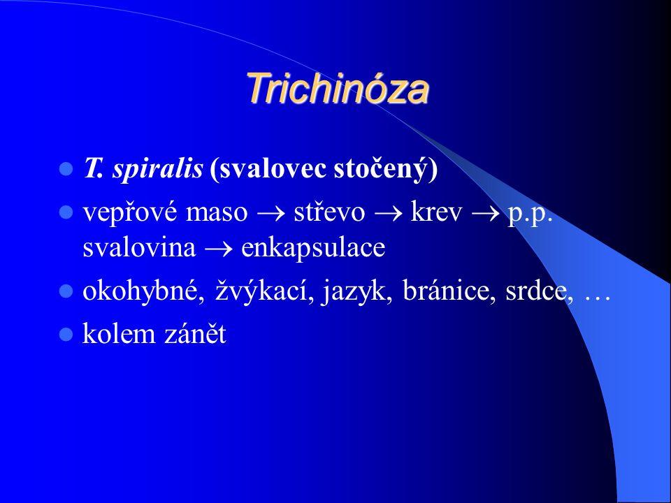 Trichinóza T. spiralis (svalovec stočený) vepřové maso  střevo  krev  p.p.