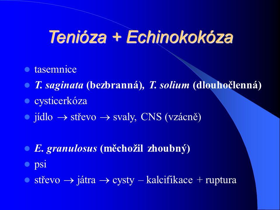 Tenióza + Echinokokóza tasemnice T. saginata (bezbranná), T.