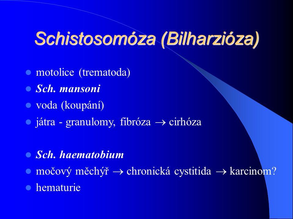Schistosomóza (Bilharzióza) motolice (trematoda) Sch.
