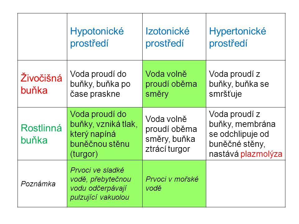 Hypotonické prostředí Izotonické prostředí Hypertonické prostředí Živočišná buňka Voda proudí do buňky, buňka po čase praskne Voda volně proudí oběma směry Voda proudí z buňky, buňka se smršťuje Rostlinná buňka Voda proudí do buňky, vzniká tlak, který napíná buněčnou stěnu (turgor) Voda volně proudí oběma směry, buňka ztrácí turgor Voda proudí z buňky, membrána se odchlipuje od buněčné stěny, nastává plazmolýza Poznámka Prvoci ve sladké vodě, přebytečnou vodu odčerpávají pulzující vakuolou Prvoci v mořské vodě