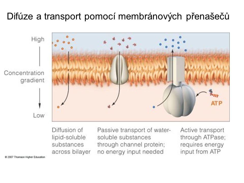 Difúze a transport pomocí membránových přenašečů