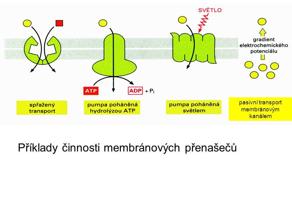 Příklady činnosti membránových přenašečů pasivní transport membránovým kanálem