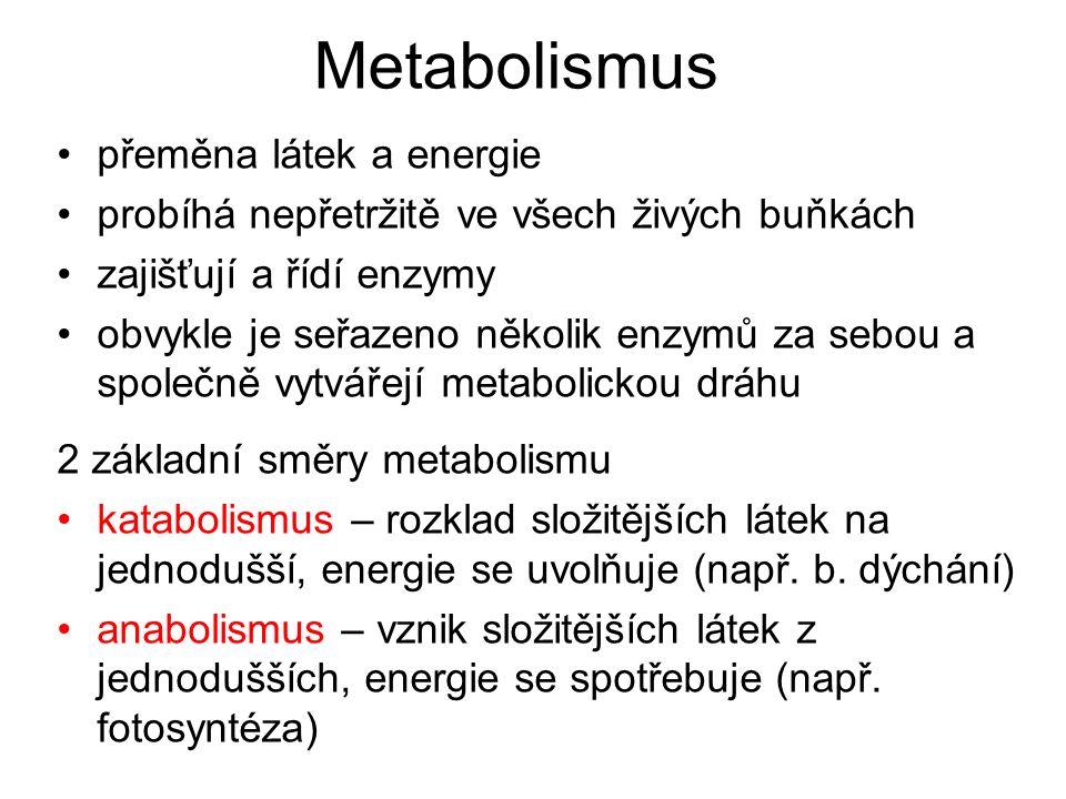 Metabolismus přeměna látek a energie probíhá nepřetržitě ve všech živých buňkách zajišťují a řídí enzymy obvykle je seřazeno několik enzymů za sebou a společně vytvářejí metabolickou dráhu 2 základní směry metabolismu katabolismus – rozklad složitějších látek na jednodušší, energie se uvolňuje (např.