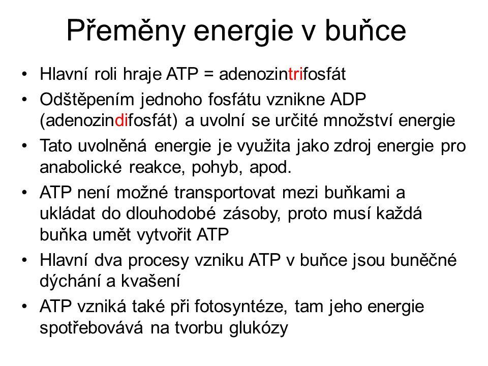 Přeměny energie v buňce Hlavní roli hraje ATP = adenozintrifosfát Odštěpením jednoho fosfátu vznikne ADP (adenozindifosfát) a uvolní se určité množství energie Tato uvolněná energie je využita jako zdroj energie pro anabolické reakce, pohyb, apod.