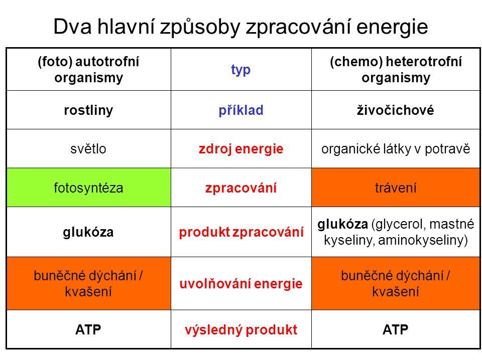 Dva hlavní způsoby zpracování energie (foto) autotrofní organismy typ (chemo) heterotrofní organismy rostlinypříkladživočichové světlozdroj energieorganické látky v potravě fotosyntézazpracovánítrávení glukózaprodukt zpracování glukóza (glycerol, mastné kyseliny, aminokyseliny) buněčné dýchání / kvašení uvolňování energie buněčné dýchání / kvašení ATPvýsledný produktATP