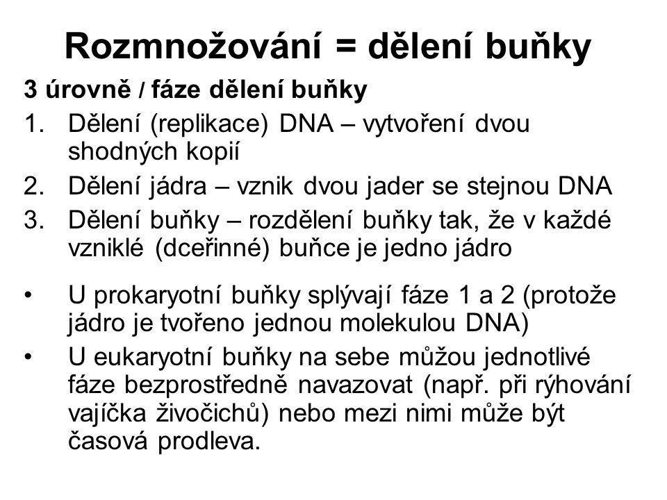 Rozmnožování = dělení buňky 3 úrovně / fáze dělení buňky 1.Dělení (replikace) DNA – vytvoření dvou shodných kopií 2.Dělení jádra – vznik dvou jader se stejnou DNA 3.Dělení buňky – rozdělení buňky tak, že v každé vzniklé (dceřinné) buňce je jedno jádro U prokaryotní buňky splývají fáze 1 a 2 (protože jádro je tvořeno jednou molekulou DNA) U eukaryotní buňky na sebe můžou jednotlivé fáze bezprostředně navazovat (např.