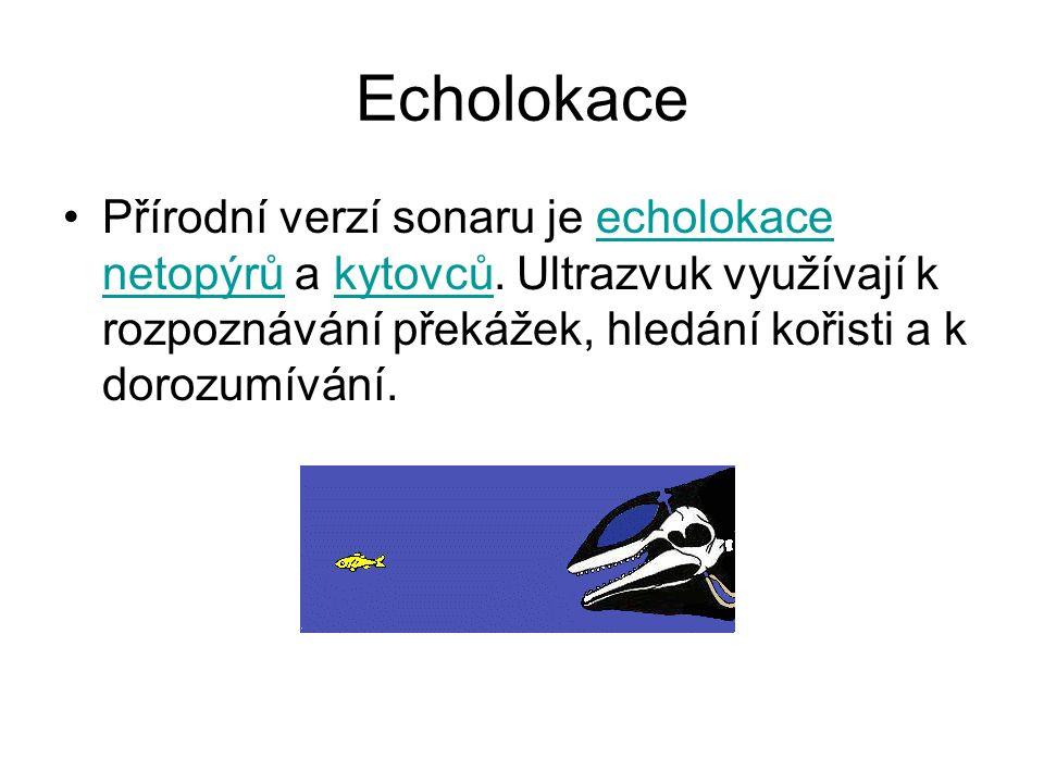 Echolokace Přírodní verzí sonaru je echolokace netopýrů a kytovců. Ultrazvuk využívají k rozpoznávání překážek, hledání kořisti a k dorozumívání.echol