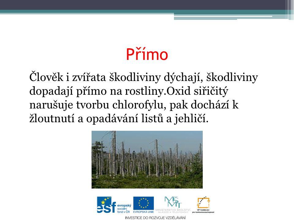 Přímo Člověk i zvířata škodliviny dýchají, škodliviny dopadají přímo na rostliny.Oxid siřičitý narušuje tvorbu chlorofylu, pak dochází k žloutnutí a opadávání listů a jehličí.