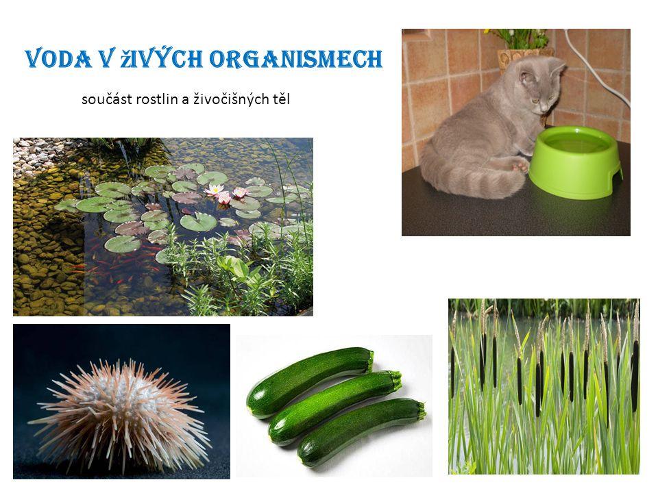 Voda v ž ivých organismech součást rostlin a živočišných těl