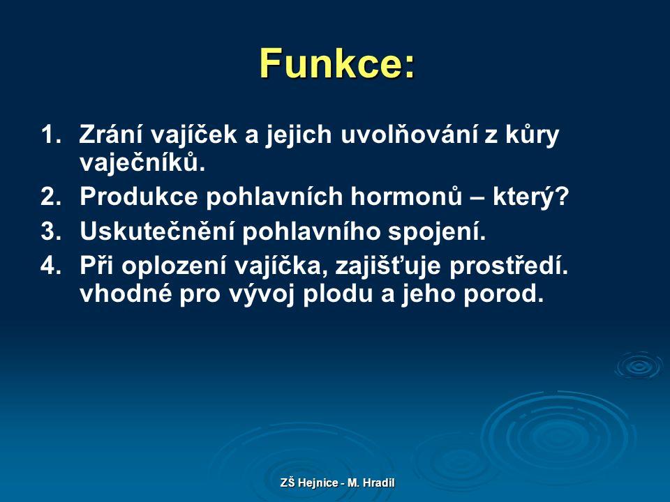ZŠ Hejnice - M. Hradil Topografie ženských pohlavních orgánů Obr.1