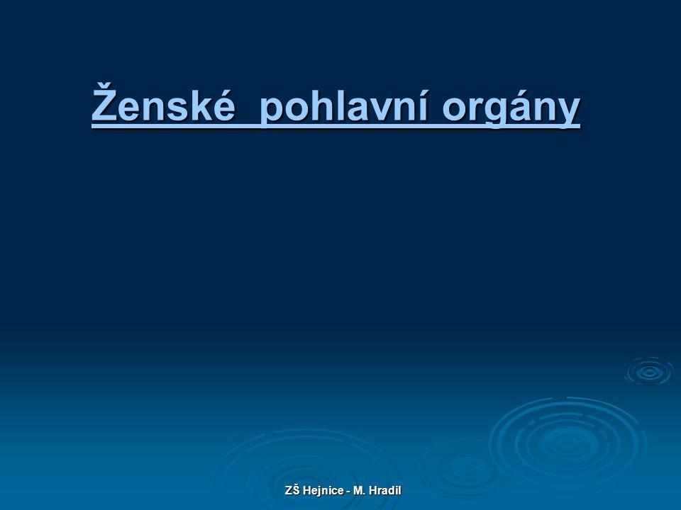 ZŠ Hejnice - M. Hradil Ženské pohlavní orgány Ženské pohlavní orgány