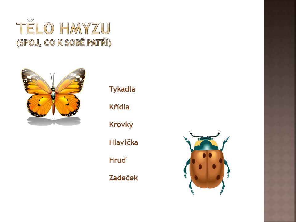  Mandelinka bramborová  Včela medonosná  Moucha domácí  Mravenec lesní  Vosa  Mšice  Komár písklavý  Bělásek zelný  Slunéčko sedmitečné  Čmelák