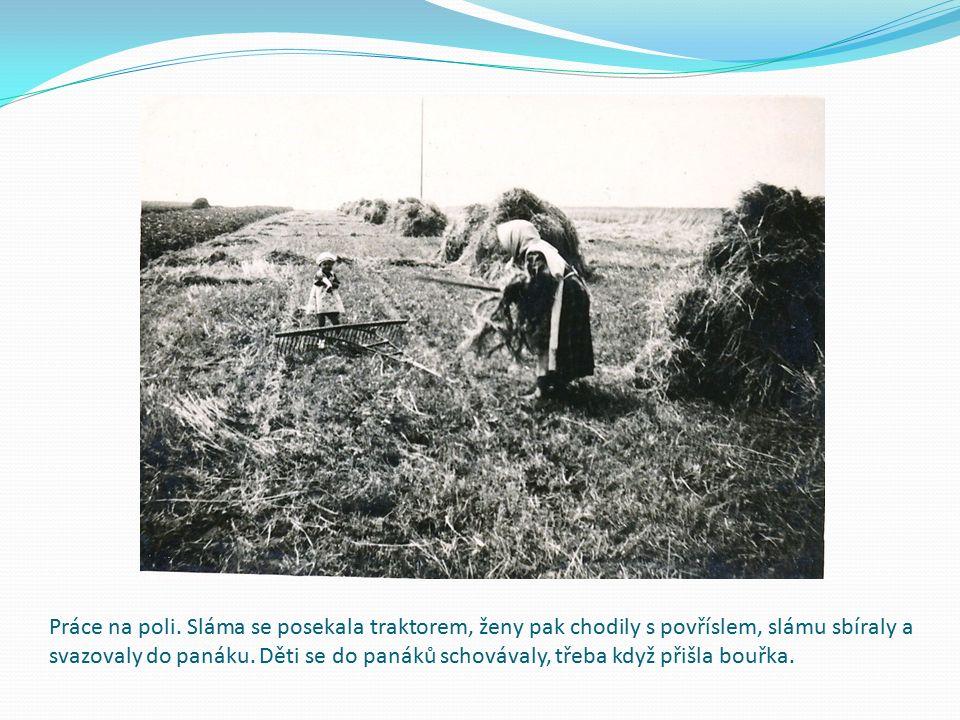 Práce na poli. Sláma se posekala traktorem, ženy pak chodily s povříslem, slámu sbíraly a svazovaly do panáku. Děti se do panáků schovávaly, třeba kdy