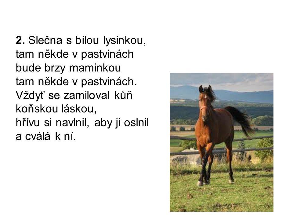 3.Když se zamiluje kůň tam někde v pastvinách láskou hlubokou jak tůň tam někde v pastvinách.