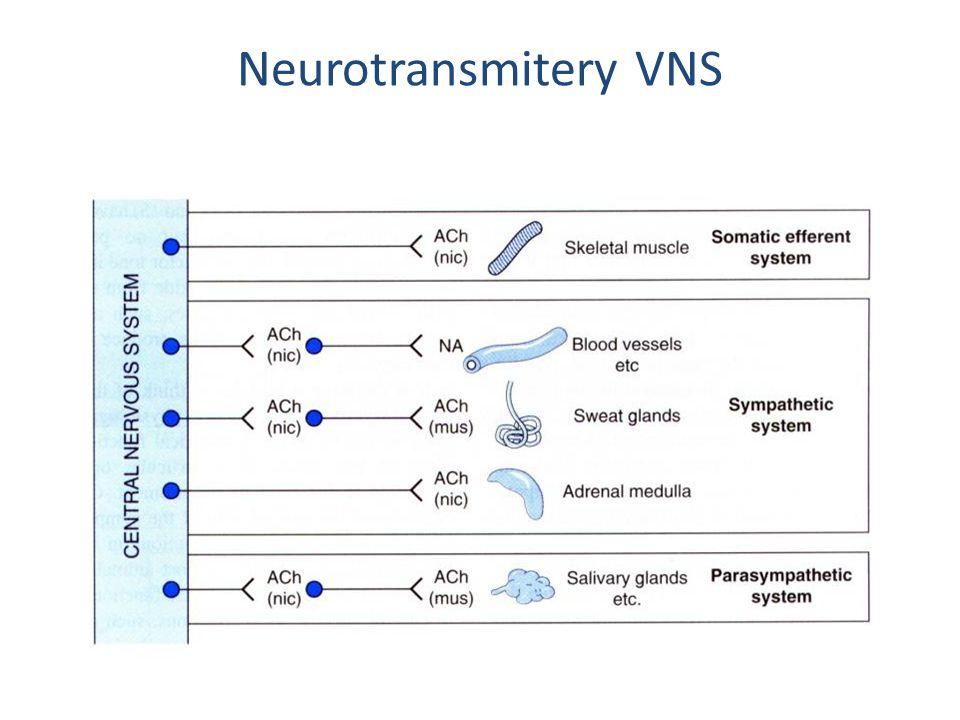 Neurotransmitery VNS