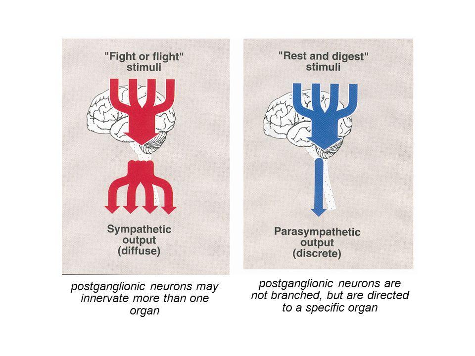 Anticholinergní farmaka s účinky antimuskarinovými a antinikotinovými v GITu a GUS působí spazmolyticky – na veškerou hladkou svalovinu včetně sfinkterů butylbromid skopolaminu, oxyfenonium,, otilonium, ipratropium, trospium,