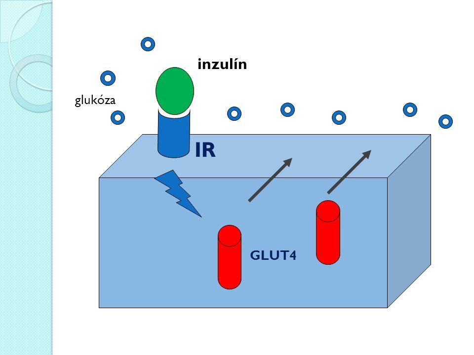 GLUT4 IR inzulín glukóza