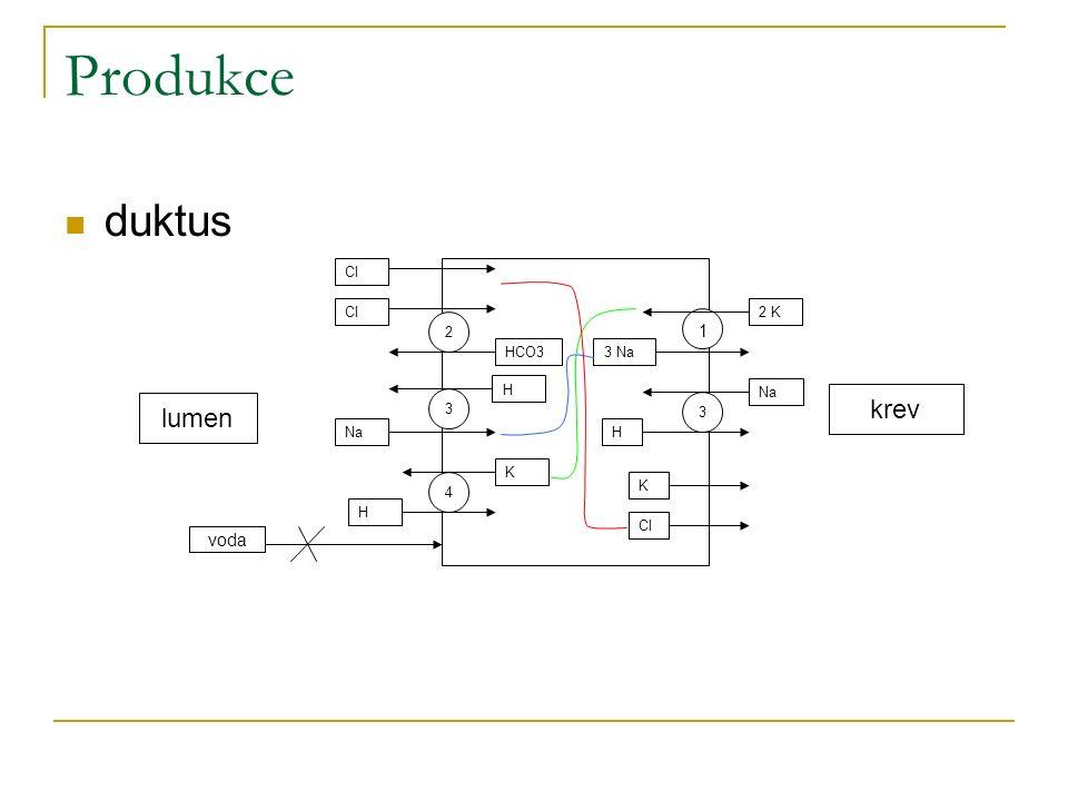 Produkce duktus 1 2 K 3 Na 2 Cl HCO3 3 Na H 4 K H 3 H Cl K lumen krev voda