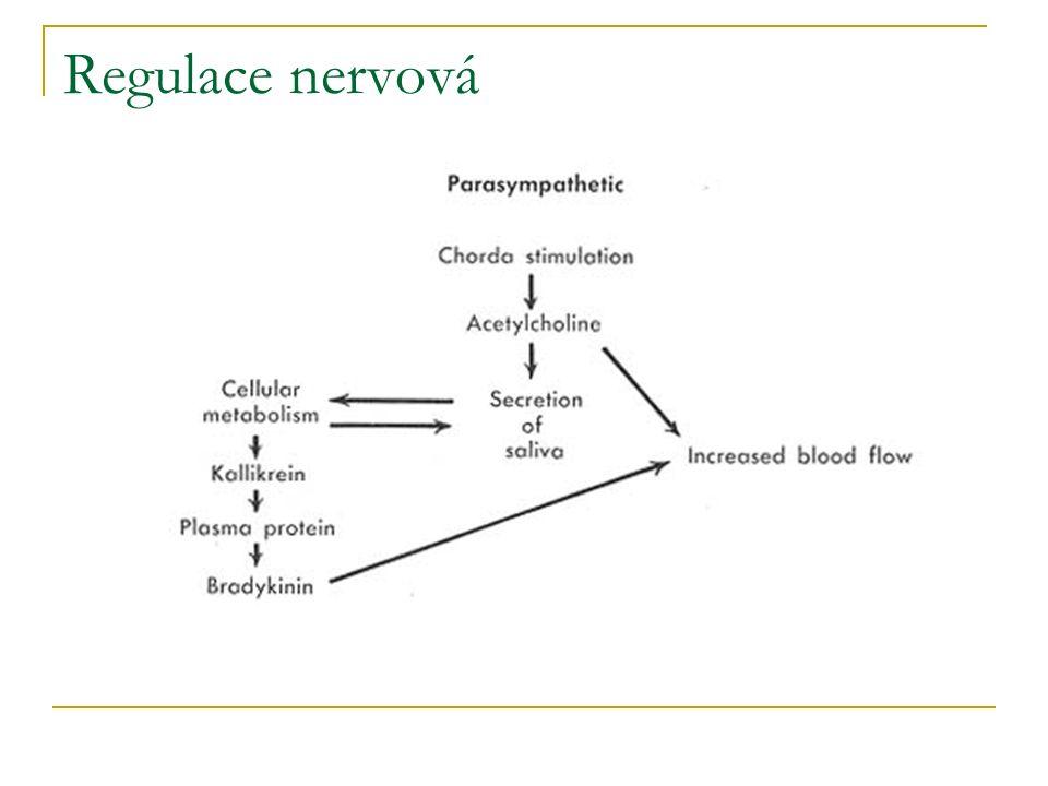 Regulace nervová