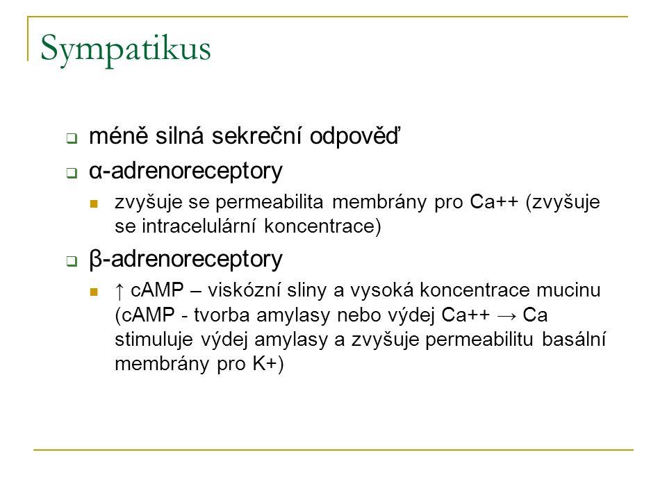 Sympatikus  méně silná sekreční odpověď  α-adrenoreceptory zvyšuje se permeabilita membrány pro Ca++ (zvyšuje se intracelulární koncentrace)  β-adr