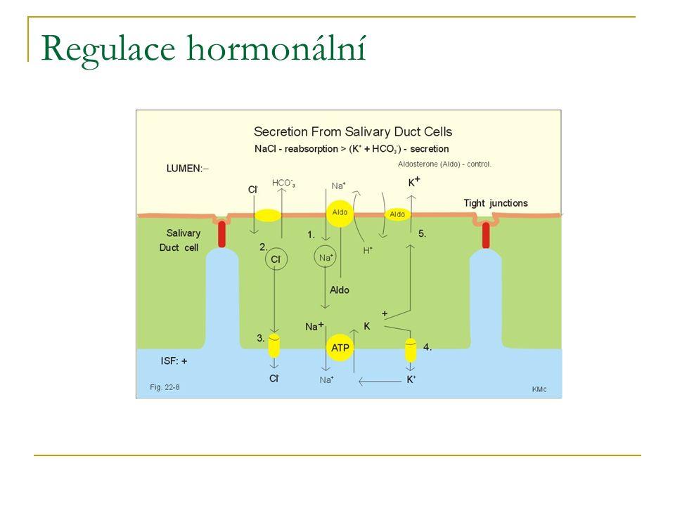 Regulace hormonální