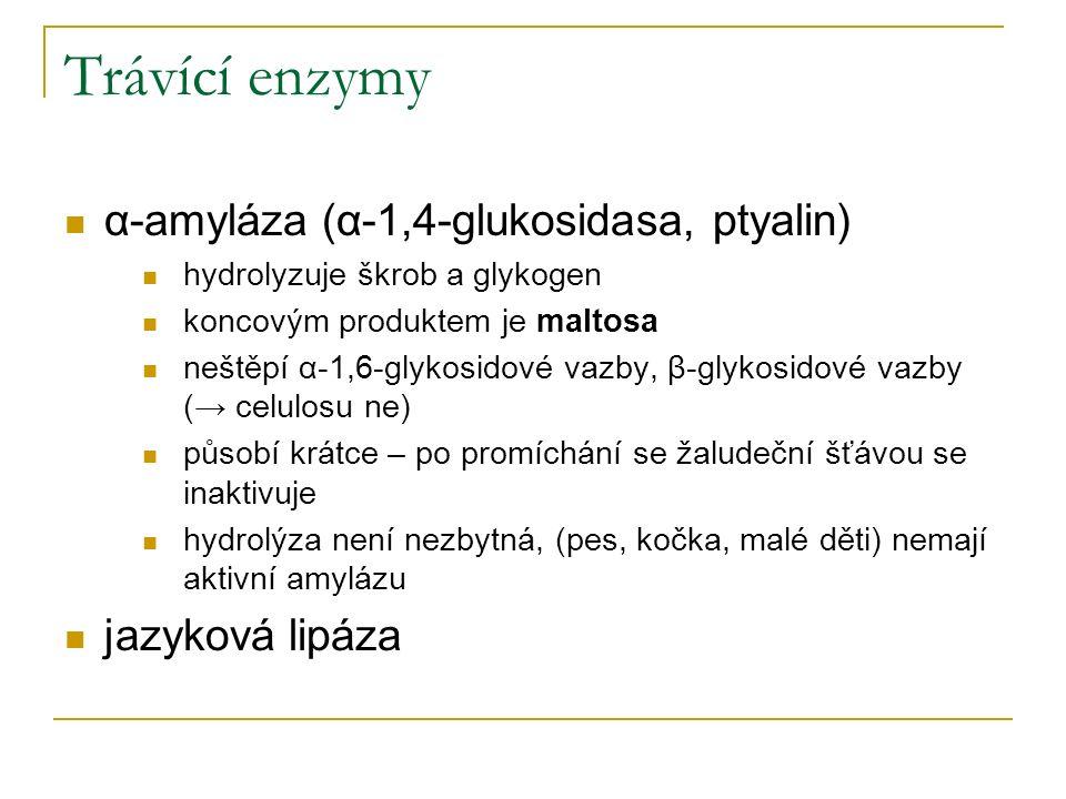 Trávící enzymy α-amyláza (α-1,4-glukosidasa, ptyalin) hydrolyzuje škrob a glykogen koncovým produktem je maltosa neštěpí α-1,6-glykosidové vazby, β-gl