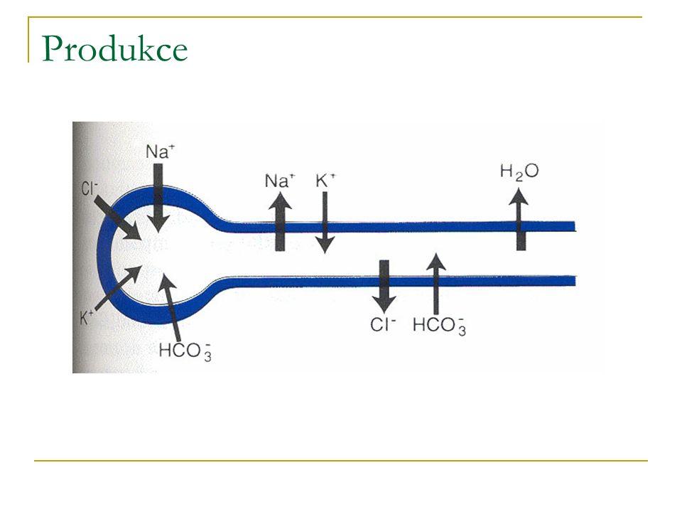 acinus 1 2 K 3 Na 2 Na 2 Cl K 3 42 Na voda 3 K lumen krev
