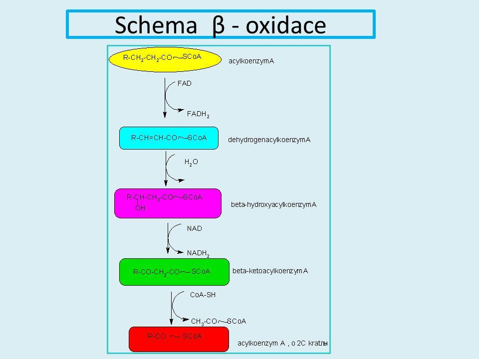 Schema β - oxidace
