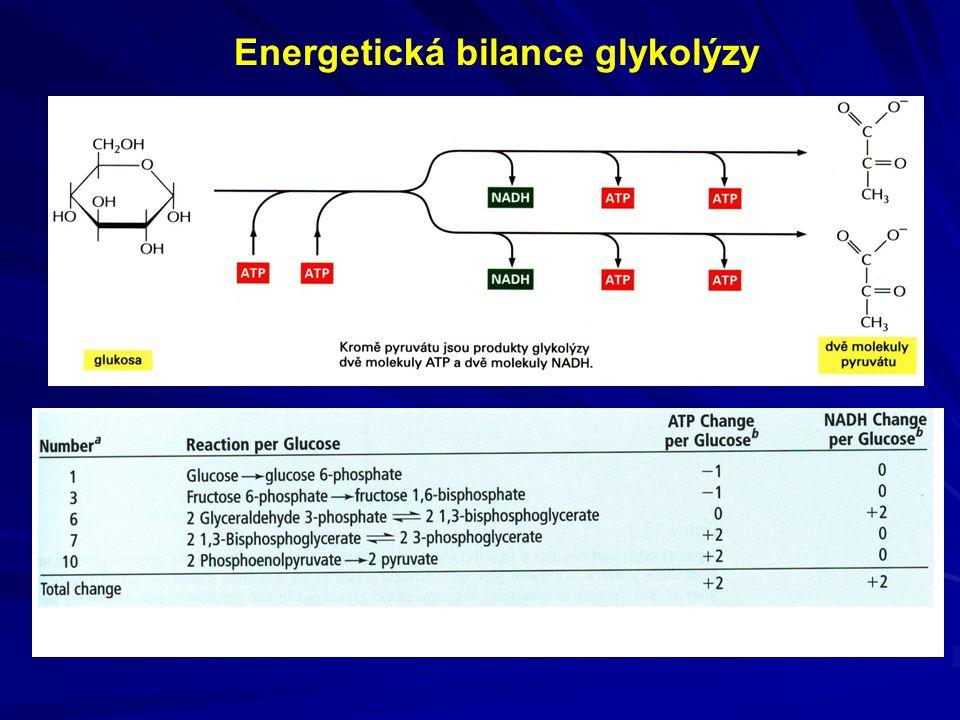 Energetická bilance glykolýzy
