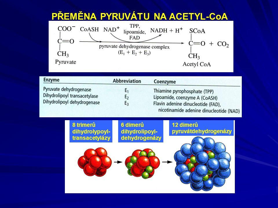 PŘEMĚNA PYRUVÁTU NA ACETYL-CoA 8 trimerů dihydrolypoyl- transacetylázy 6 dimerů dihydrolipoyl- dehydrogenázy 12 dimerů pyruvátdehydrogenázy