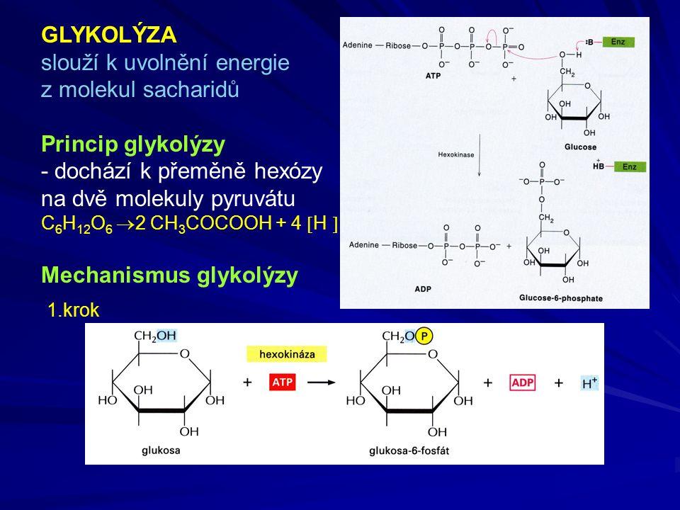 GLYKOLÝZA slouží k uvolnění energie z molekul sacharidů Princip glykolýzy - dochází k přeměně hexózy na dvě molekuly pyruvátu C 6 H 12 O 6  2 CH 3 COCOOH + 4  H  Mechanismus glykolýzy 1.krok