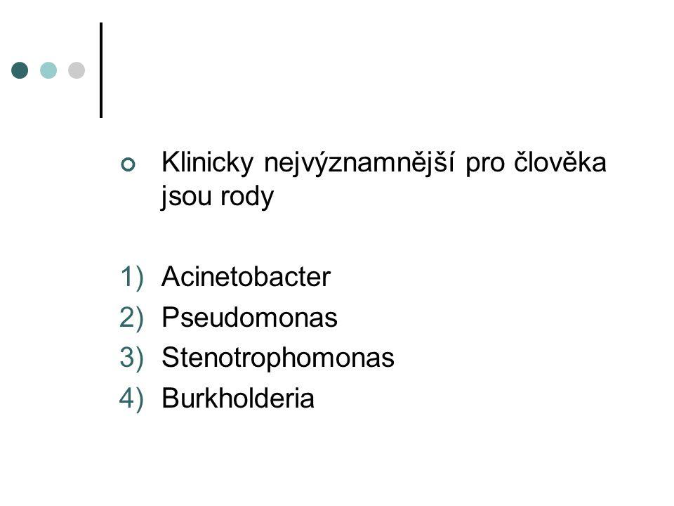 Klinicky nejvýznamnější pro člověka jsou rody 1)Acinetobacter 2)Pseudomonas 3)Stenotrophomonas 4)Burkholderia