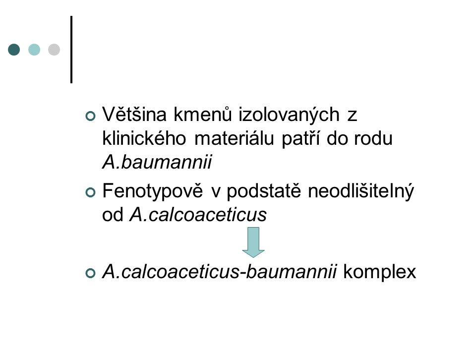 Většina kmenů izolovaných z klinického materiálu patří do rodu A.baumannii Fenotypově v podstatě neodlišitelný od A.calcoaceticus A.calcoaceticus-baumannii komplex