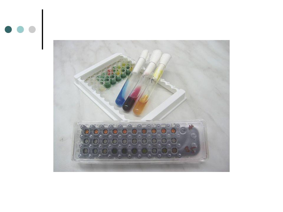 Stanovením citlivosti zjištěno, že se jedná skutečně o polyrezistentní kmen PSAE, ponechána terapie kolistinem, piperacilin/tazobaktam (Tazocin) vysazený Kultivace nefermentujících tyčinek- Stenotrophomonas maltophilia- přidán kotrimoxazol