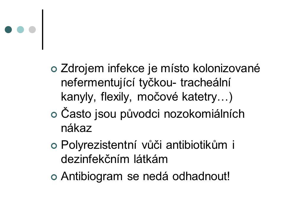 Gramnegativní baktérie, stěry z ran a otisky, počet kmenů, KPRCH FN Brno