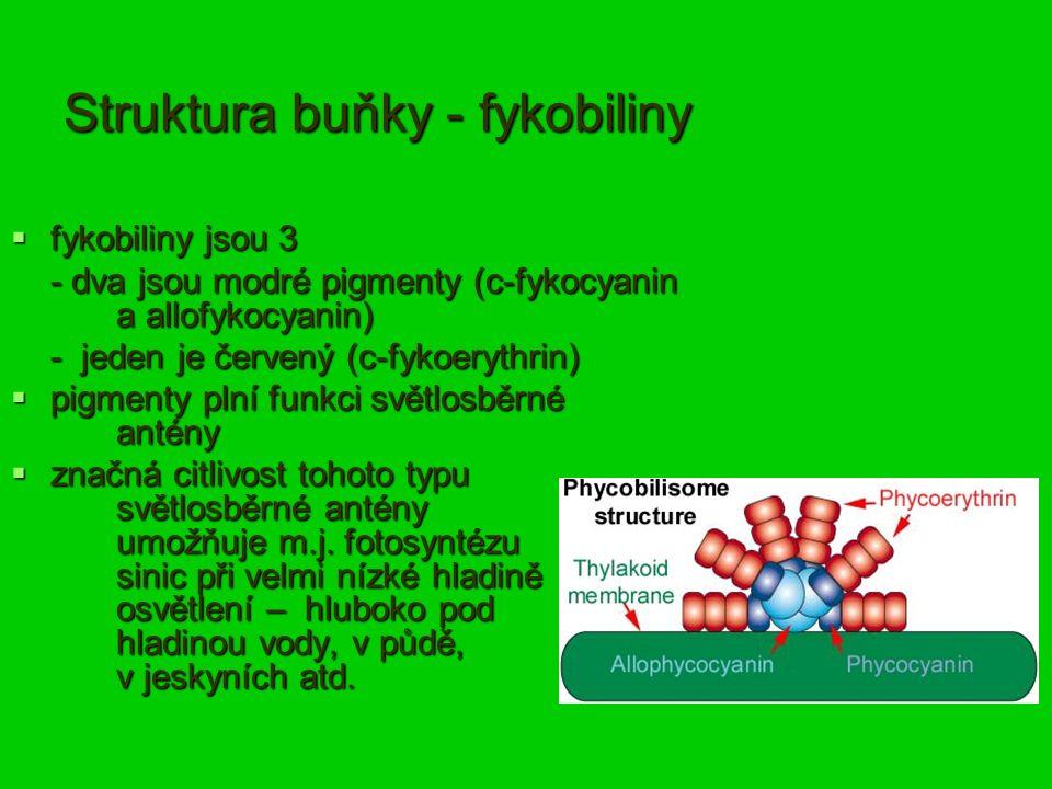Struktura buňky - fykobiliny  fykobiliny jsou 3 - dva jsou modré pigmenty (c-fykocyanin a allofykocyanin) - jeden je červený (c-fykoerythrin)  pigmenty plní funkci světlosběrné antény  značná citlivost tohoto typu světlosběrné antény umožňuje m.j.