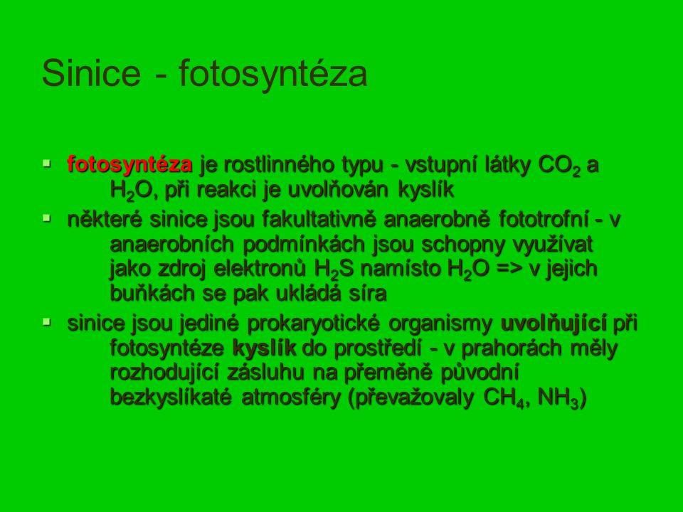 Sinice - fotosyntéza  fotosyntéza je rostlinného typu - vstupní látky CO 2 a H 2 O, při reakci je uvolňován kyslík  některé sinice jsou fakultativně anaerobně fototrofní - v anaerobních podmínkách jsou schopny využívat jako zdroj elektronů H 2 S namísto H 2 O => v jejich buňkách se pak ukládá síra  sinice jsou jediné prokaryotické organismy uvolňující při fotosyntéze kyslík do prostředí - v prahorách měly rozhodující zásluhu na přeměně původní bezkyslíkaté atmosféry (převažovaly CH 4, NH 3 )