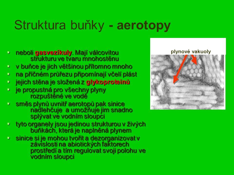 Struktura buňky - aerotopy  neboli gasvezikuly.