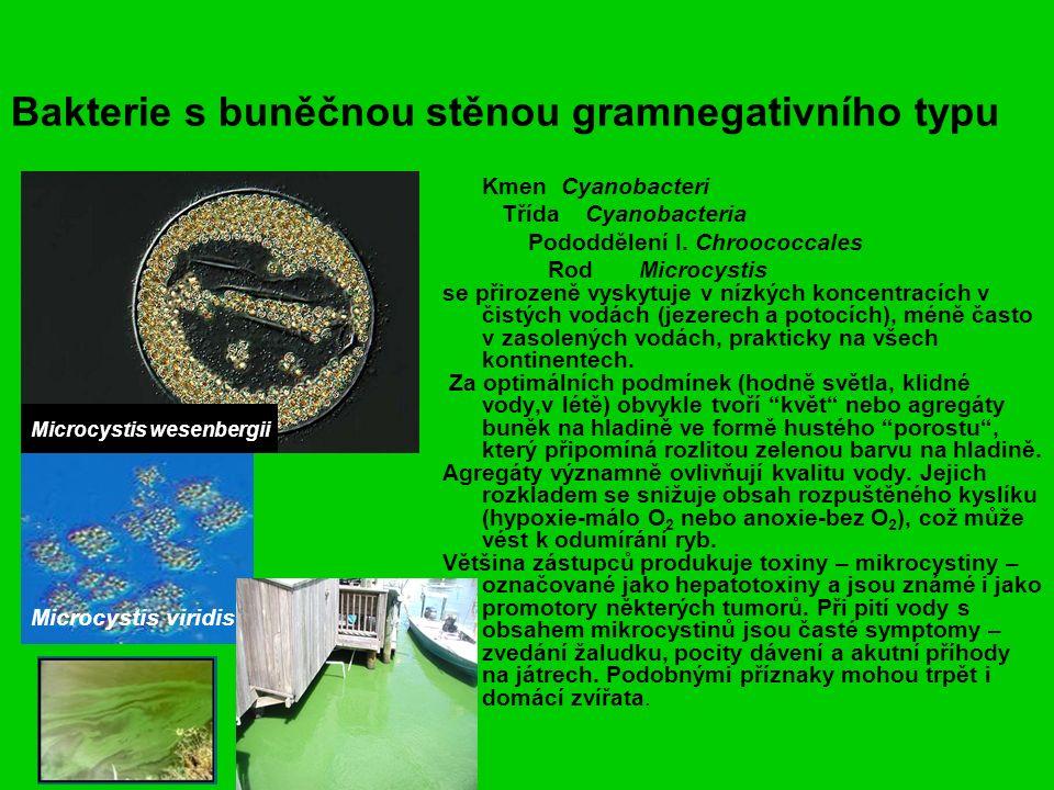 Bakterie s buněčnou stěnou gramnegativního typu Kmen Cyanobacteri Třída Cyanobacteria Pododdělení I.