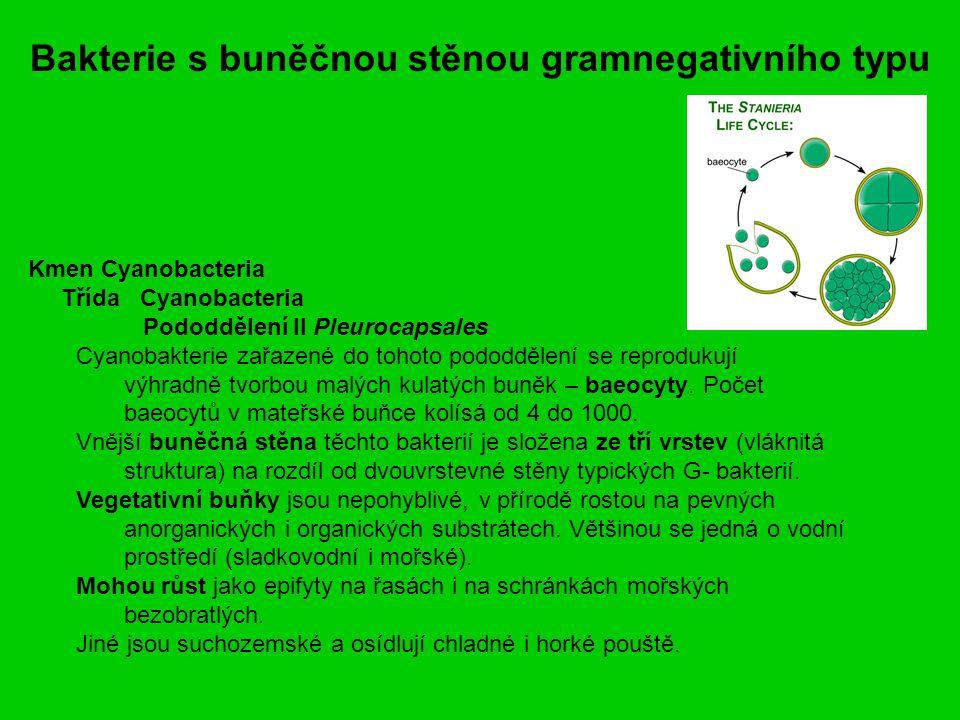 Bakterie s buněčnou stěnou gramnegativního typu Kmen Cyanobacteria Třída Cyanobacteria Pododdělení II Pleurocapsales Cyanobakterie zařazené do tohoto pododdělení se reprodukují výhradně tvorbou malých kulatých buněk – baeocyty.