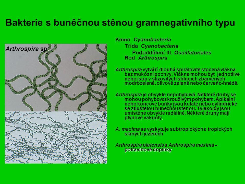 Bakterie s buněčnou stěnou gramnegativního typu Kmen Cyanobacteria Třída Cyanobacteria Pododdělení III.
