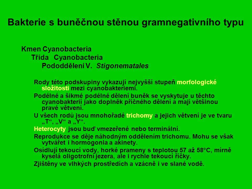 Bakterie s buněčnou stěnou gramnegativního typu Kmen Cyanobacteria Třída Cyanobacteria Pododdělení V.
