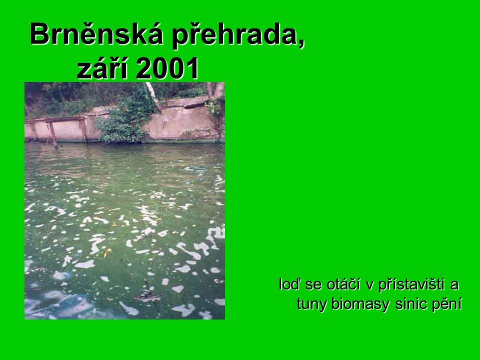 Brněnská přehrada, září 2001 Brněnská přehrada, září 2001 loď se otáčí v přístavišti a tuny biomasy sinic pění