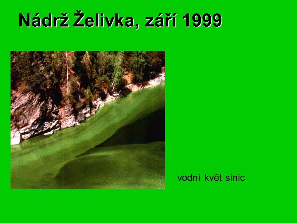 Nádrž Želivka, září 1999 vodní květ sinic