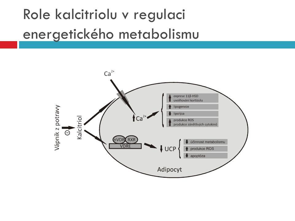Role kalcitriolu v regulaci energetického metabolismu
