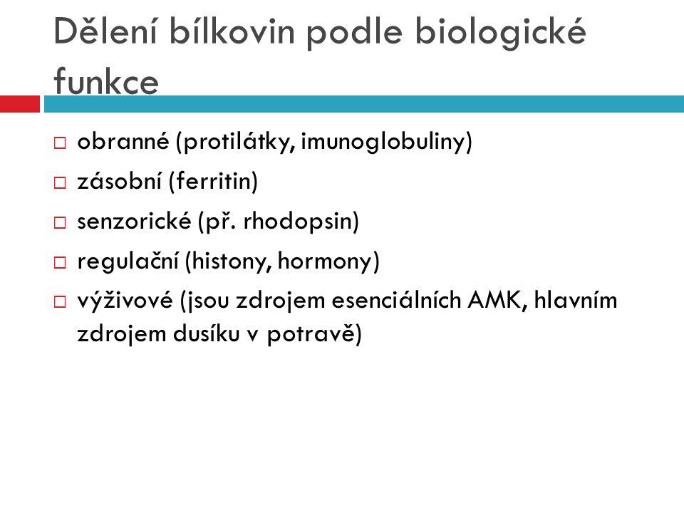 Dělení bílkovin podle biologické funkce  obranné (protilátky, imunoglobuliny)  zásobní (ferritin)  senzorické (př. rhodopsin)  regulační (histony,