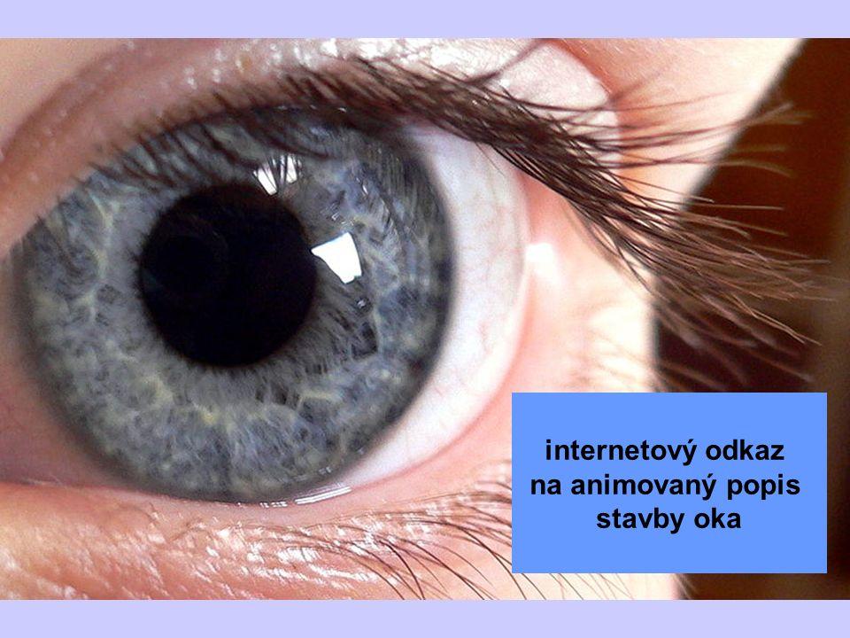 internetový odkaz na animovaný popis stavby oka