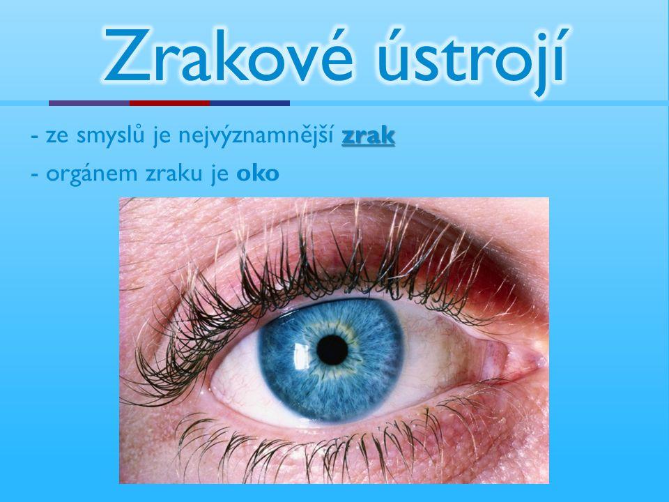 - orgánem zraku je oko zrak - ze smyslů je nejvýznamnější zrak