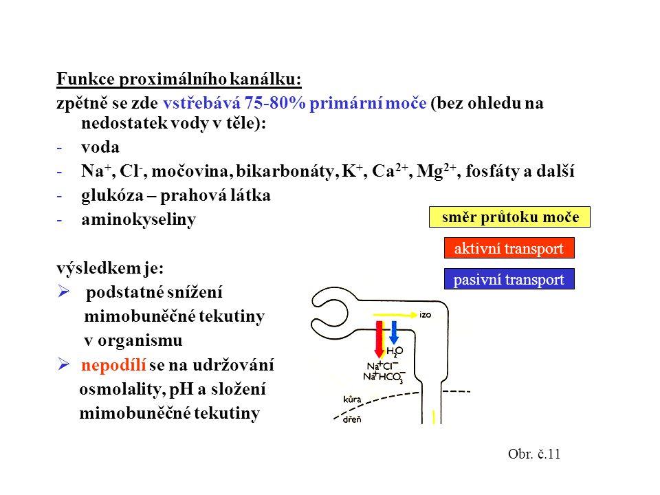 Funkce proximálního kanálku: zpětně se zde vstřebává 75-80% primární moče (bez ohledu na nedostatek vody v těle): -voda -Na +, Cl -, močovina, bikarbonáty, K +, Ca 2+, Mg 2+, fosfáty a další -glukóza – prahová látka -aminokyseliny výsledkem je:  podstatné snížení mimobuněčné tekutiny v organismu  nepodílí se na udržování osmolality, pH a složení mimobuněčné tekutiny Obr.