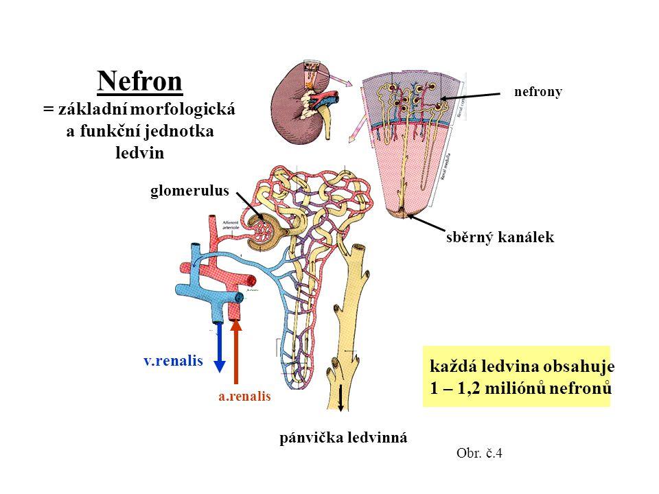 nefrony glomerulus pánvička ledvinná sběrný kanálek v.renalis a.renalis Nefron = základní morfologická a funkční jednotka ledvin každá ledvina obsahuje 1 – 1,2 miliónů nefronů Obr.